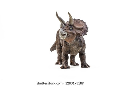 Triceratops  ,dinosaur on white background  .
