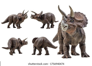 Triceratops  ,dinosaur on white background  .