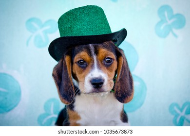 Tricolor Beagle Puppy Wearing a Green Glitter Top Hat in front of a Shamrock St. Patrick's Day Background