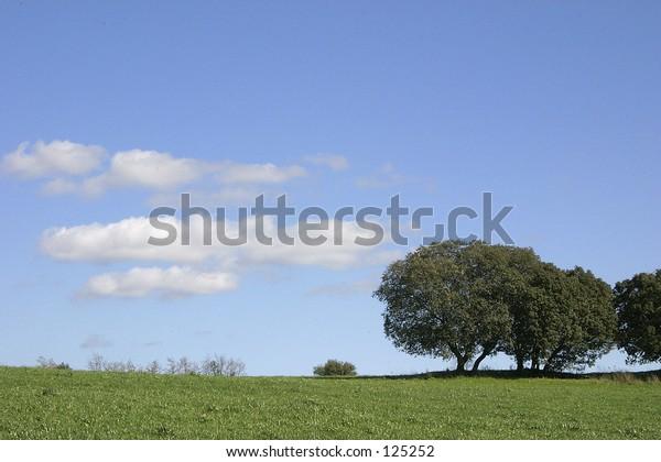 Tricolor landscape