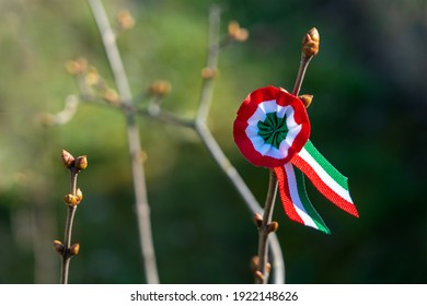 tricolor rosette on spring tree with bud symbol of the hungarian national day 15th of march