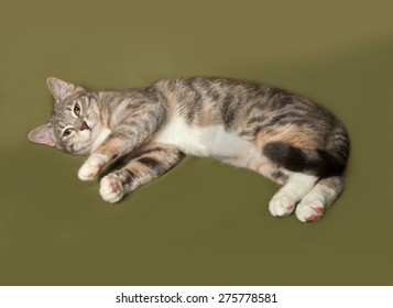 Tricolor striped cat lies on green background