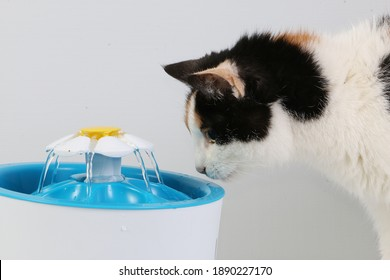 tricolored cat drinks fresh water from an electric drinking fountain