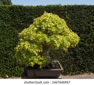 Bonsai with Rock Images, Stock Photos & Vectors | Shutterstock