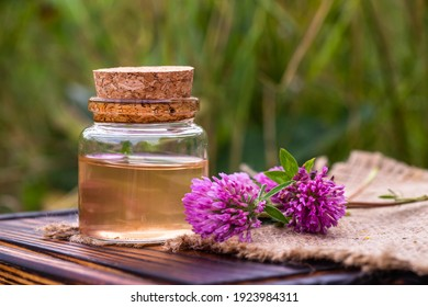 Trifolium pratense, red clover. Collect valuable flowers from moment of flowering, and start drying. Decoction of clover and infusion in clear bottle with cork. alternative medicine. Herbal concept