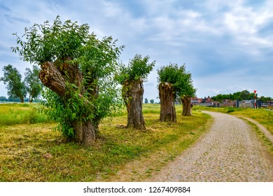 Trimmed, gnarled trees at a cobblestone path near the Elbe River at the small medieval town Hitzacker, Germany