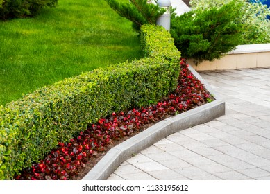 trimmed shrubs with flowers at the stone path in landscape design