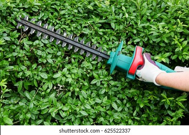Trimming garden hedge with electrical hedge trimmer