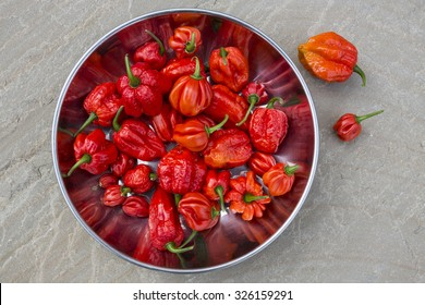 Trinidad Moruga Scorpion  2,009,231 on Scoville scale. AKA Moruga Scorpion, is a rare sought after pepper that was only just recently discovered. Native to the lands of Moruga in Trinidad and Tobago