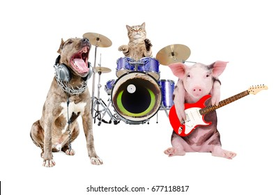Trio of animal musicians, isolated on white background