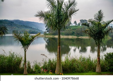A trio of palm trees stand in front of Lake Bunyonyi, Africa's second deepest lake near Kabale in Uganda, East Africa close to the border with Rwanda