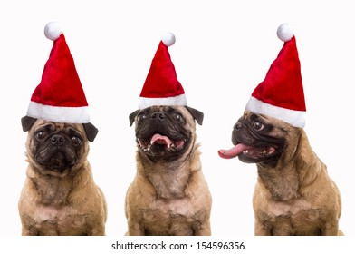 Christmas Hats For Dogs.Pug Dog In Santa Hat Images Stock Photos Vectors