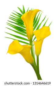 Trio of yellow calla with palm branch isolated on white background