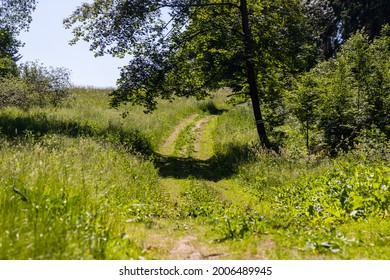 trip road through a green meadow with mature grass