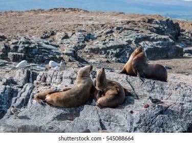 Trip in Tierra de Fuego