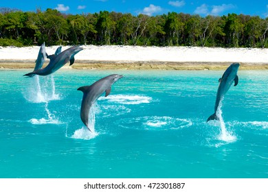 Triple Dolphin Jump (Bahamas)