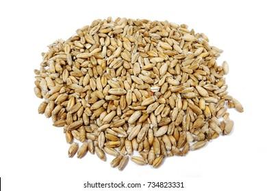 triticale seeds (Triticosecale)