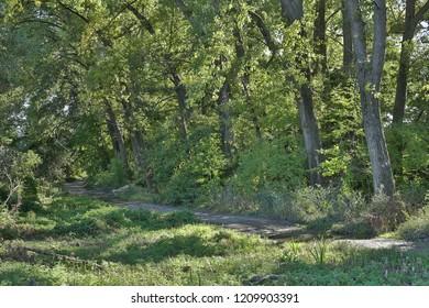 Trnava Slovakia green forest park