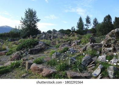 TROMSO, TROMS OG FINNMARK COUNTY / NORWAY - AUGUST 08 2020: Arctic–Alpine Botanic Garden in the city of Tromso (Tromsø). This  is the world's northernmost botanic garden