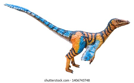 Troodon is a carnivorous dinosaur genus, Troodon is like a bird and lived in the Cretaceous period, isolated on white background with clipping path