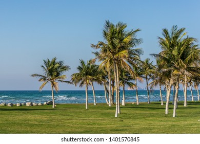 Tropcal palm treen in Qurum beach, Muscat. Green grass, sea waves and blue sky.