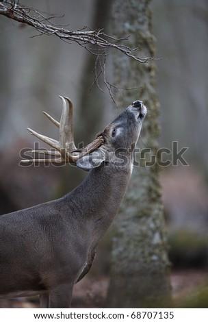 Parks big deer lick images 740