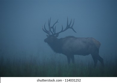 Trophy-class Bull Elk Stag in dense morning fog; Benezette, Pennsylvania big game, elk, & deer hunting