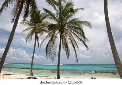 Tropic palms on a sandy beach on famous island Half Moon Caye. Caribbean sea. Belize