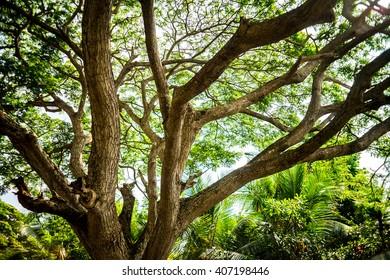 tropic tree branch
