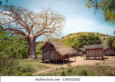 tropical African village in Madagascar, wooden huts and a baobab tree