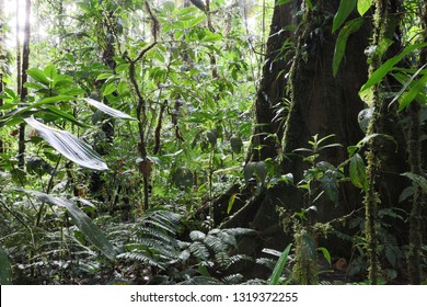 Tropical Amazon rain forest Colombia, lush vegetation after the rain an exotic rainforest with big trees