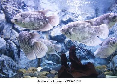 tropical  aquarium with fishes