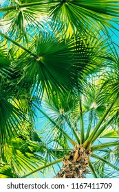 tropical backdrop of palm leaves against the sky