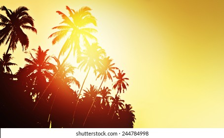 Tropical background with coconut palm trees
