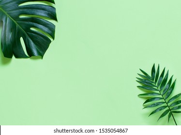 Tropical background with green Monstera leaves on a light green background top view