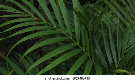Tropical background green plant leaf South America forest jungle palm tree