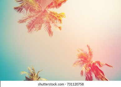 tropical background palm trees sun light holiday travel design card filter pastel effect