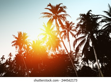 Tropical background with palm trees at sunset