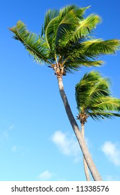 Tropical background of palms on blue sky