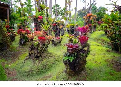 Tropical Balata garden in Martinique. Beautiful bromeliaceae in tropical garden in Martinique.