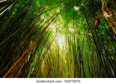 Tropical bamboo forest