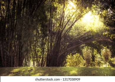 Tropical bamboo grove landscape background with enlightenment sunlight through lush foliage vintage style