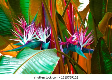 Tropical banana leaf background with bird of paradise fern. Trendy zine culture, raw color look gradient background nature. Magazine cover still life view of large palm foliage for collage.