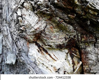 tropical bark wood surface struture pattern