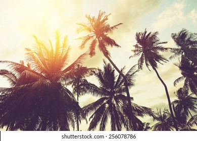 Tropical beach background with palm trees silhouette at sunset. Vintage effect.