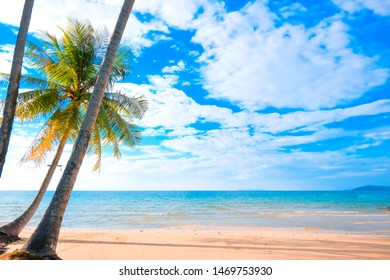 Tropical beach background as summe with palm tree on blue sky and white cloud for travel and vacation in holiday