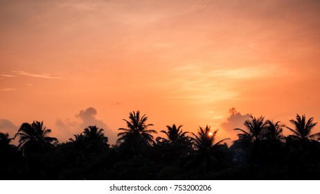 Tropical beach banner, sunset sunrise sky with palm trees