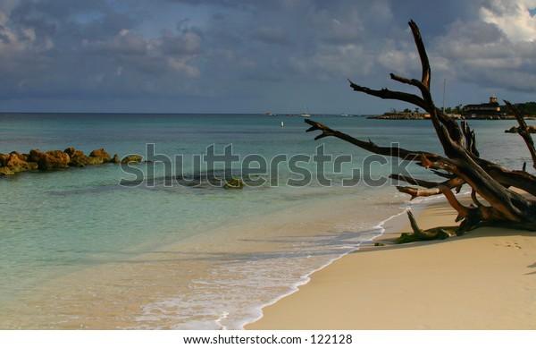 Tropical Beach, Barbados