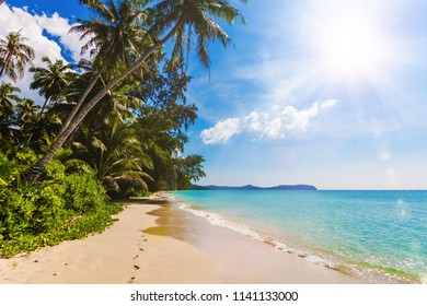 tropical beach. Beautiful beach with palm trees