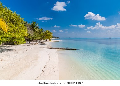 Tropical beach blue sea and palm trees and white sand on the Maldives island. Summer travel destination